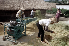 32-157 (ndpa / s. lundeen, archivist) Tags: houses homes winter people woman house color building fall film home rural 35mm buildings workers women village basket rice nick working taiwan machine rake barefoot worker thatchedroof 1970s 1972 hualien 32 taiwanese eastcoast unidentified raking thresher threshing dewolf rurallife thatchroof republicofchina easterncoast easterntaiwan nickdewolf photographbynickdewolf hualiencounty ricethresher threshingrice reel32