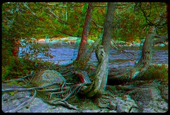 Pinguisibi (Sand River) 3-D ::: HDR/Raw Anaglyph Stereoscopy (Stereotron) Tags: plants lake ontario canada tree america creek forest radio canon river eos stereoscopic stereophoto stereophotography 3d woods raw control north kitlens twin anaglyph stereo backcountry stereoview outback remote spatial 1855mm hdr province redgreen 3dglasses hdri transmitter stereoscopy synch anaglyphic optimized in threedimensional stereo3d cr2 stereophotograph anabuilder synchron redcyan 3rddimension 3dimage tonemapping 3dphoto 550d stereophotomaker 3dstereo 3dpicture quietearth anaglyph3d yongnuo stereotron