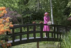 H.M Dronningen i Tambours have (Varde Kommune) Tags: dronning margrethe tambourshave blomster sol sommer lyserød glæde have hmdronningen hendes majestæt åkande blomst træ bro vand sommertogt 2016