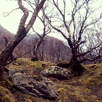Trees on Skye thumbnail