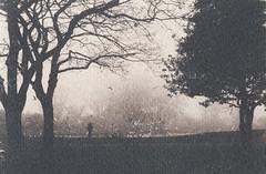 (the matt1) Tags: park east hull toned cyanotype