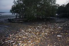 Dead fishes at Lim Chu Kang Jetty, 8 Mar 2015 (wildsingapore) Tags: fish nature island death marine singapore underwater wildlife litter coastal shore threats farms mass intertidal seashore marinelife aquaculture wildsingapore limchukang massfishdeath