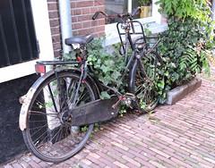 dutch pushbikes (5) (bertknot) Tags: bikes fietsen fiets pushbikes dutchbikes dutchpushbikes