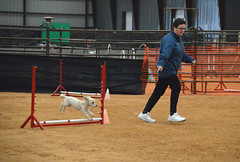 agility261 (jaimekay16) Tags: dog training austin agility k9 xpress nadac k9x