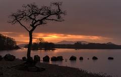 One Beautiful Setting (Captain Nikon) Tags: sunset mountains silhouette scotland rocks lochlomond lonetree sigma1020mmf4 milarrochybay nikond7000