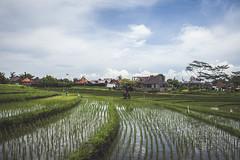 Indonezija 2015