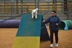 agility262 (jaimekay16) Tags: dog training austin agility k9 xpress nadac k9x