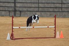 agility250 (jaimekay16) Tags: dog training austin agility k9 xpress nadac k9x