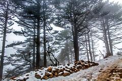 Solitude - Sandakphu !! (sandy_photo) Tags: blue trees nepal india snow ice beautiful canon landscape eos altitude sigma himalaya snowfall incredible eastern bengal himalayas tundra mts mountainscape 70300 sandakphu 3636 kanchanjungha 1100d