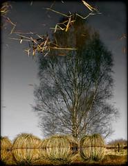 Un temps à foutre les boules (Clydomatic) Tags: eau reflet arbre herbe
