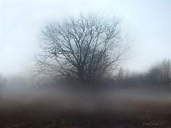 Fog (Firefly Ju) Tags: tree fog atumn