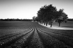 corduroy fields (PenelopeEfstop) Tags: ontario field farm soil plough furrows uxbridge