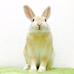 moco () Tags: pet bunny   rabbitt