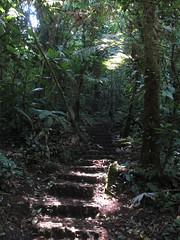 "La Réserve de Monteverde <a style=""margin-left:10px; font-size:0.8em;"" href=""http://www.flickr.com/photos/127723101@N04/26945132375/"" target=""_blank"">@flickr</a>"
