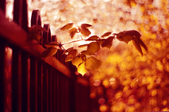 The charm of eternal glow (Paulina_77) Tags: light red orange blur detail tree art leaves yellow closeup fence gold golden leaf spring blurry focus branch dof dancing artistic bokeh background details blurred depthoffield swirl shallow depth swirly selective swirling focusing bokehlicious swirlybokeh