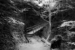 ethernal (pat.netwalk) Tags: bridge light tree dark crossing shine bright perspective darknessandlight copyrightpatrickfrank