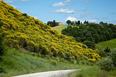 Ginestre in Val d'Orcia (RD_Elsie) Tags: valdorcia sangiovannidasso
