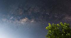 Milky Way (jdrephotography) Tags: longexposure brazil sky tree minasgerais night skyscape stars landscape outdoor space sony galaxy astrophotography citylights constellation lightpollution milkyway lagoasanta samyang rokinon astrometry