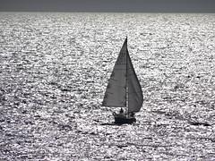 A sailing boat (Hlne_D) Tags: sea mer france museum boat marseille muse paca provence bateau mediterraneansea vieuxport voilier mditerrane sailingboat bouchesdurhne mermditerrane provencealpesctedazur mucem musedescivilisationsdeleuropeetdelamditerrane hlned