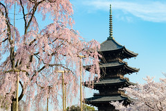 -   Tou-ji Temple in Spring (Active-U) Tags: japan kyoto