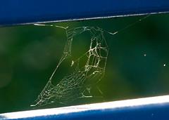 Spider web (rpennington9) Tags: spider spiders webs wpidersweb nikon nikond90