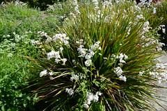 WWG13DSC_5821 (kjemem) Tags: orkney scotland wookwickhouse flower flowers