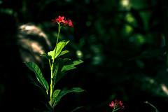 Clear Light of Mindfulness (TOTORORO.RORO) Tags: panasonic zs100     heart mind clear light nature tree    zen wabisabi tender refreshing tranquility calm mindfulness