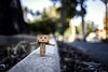 Forgotten Friend (Daniel E Lee) Tags: canon canon6d 6d fullframe nature bokeh bokehlicious naturallight ambientlight canon35mmf2is 35mm prime primelens photosbydlee photography photoshop lightroom stilllife danbo danboard danbomini