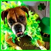 Happy St. Patricks Day! 🍀