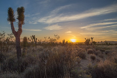Desert sunset (john farrell macdonald) Tags: