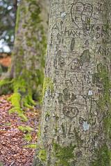 pair (Birgit F) Tags: park norway lensbaby norge moss spring kristiansand vår selectivefocus mose vestagder ravnedalen edge80