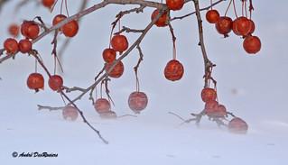 L'hiver au Domaine Maizerets