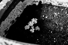 Luck (Corina Freyre Photography) Tags: bw nature luck humanvsnature