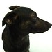 20121130 Recon the Dutch Shepherd profile model pic