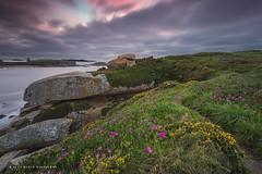 A Illa do Médico... (PITUSA 2) Tags: naturaleza flores primavera atardecer camino paisaje galicia cielo nubes pontevedra piedras illa capilla alanzada pitusa2 elsabustomagdalena illadomédico