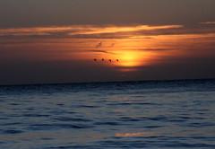 Sunrise (ray 96 blade (retired)) Tags: sea beach sunrise skies glowing seashore daybreak broadstairs earlymorningwalk