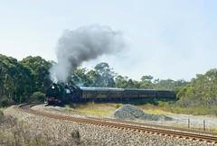 """Southern Highlander"". 3642 and 6029 on 6S63 near Yanderra, Main South, NSW, 29th March, 2015. (garratt3) Tags: railroad heritage digital train pentax rail australia trains steam newsouthwales locomotive aus 36 railfan southernhighlands steamlocomotive garratt steampower steamloco mainsouth 3642 standardgauge 6029 nswrtm nswgr railtransportmuseum 36class 60class nswheritage thnsw"