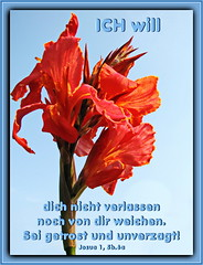 Sei getrost und unverzagt 3/ Be strong and courageous 3 (Martin Volpert) Tags: flower fleur christ god blossom faith flor blossoms pflanze blumen lord bible blomma christianity blume bibbia fiore blte herr blomst scripture virg scriptures lore biblia bloem gott blm iek floro kwiat flos holyspirit ciuri bijbel kvet kukka cvijet flouer glauben christentum bibleverses blth jesuschristus heiligergeist cvet zieds is floare blome iedas bibelverskarte mavo43 lovetruth