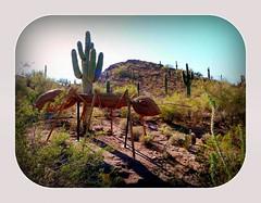 they came - FRD (milomingo) Tags: light shadow arizona cactus southwest art texture phoenix contrast bug insect landscape saturated desert bright outdoor ant hill grain vivid frame them organic saguaro multicolored sonoran photoart arid bold desertbotanicalgarden organicsculpture photoborder