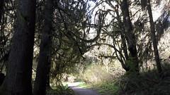 20160331_092455 (ks_bluechip) Tags: creek evans trails preserve sammamish usa2106