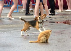 Dog and very sad cat (sergey245x) Tags: summer cat
