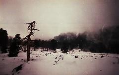 Cold (Victoria Yarlikova) Tags: winter italy snow film nature misty analog darkroom 35mm outdoors iso100 lomo lomography moody small grain scan format zenit agfa expired nebbia etna paesaggio pellicola plenka filmisalive