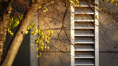 Evening Shadows (Theen ...) Tags: street autumn brown building tree leaves metal lumix grey evening afternoon shadows branches seeds trunk adelaide late bunnings louvres rundlestreet theen kenttown