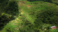 banaue (canencia) Tags: vacation mountain green nature fun rice philippines terraces more banaue province wonders