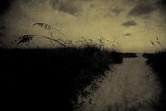 when the rain washes the light away (Lamson Noswen (c'lamson)) Tags: storm beach rain sepia florida ominous threatening textures lamson moodiness