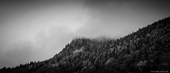 ..:: trees in the fog ::.. (bora_binguel) Tags: trees mountain tree nature berg fog landscape austria blackwhite sterreich nebel urlaub natur sis schwarzweiss landschaft bume baum da manzara aa avusturya doa aalar bobidigitalphotography