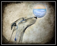 Surreal (patrick.verstappen) Tags: dog art texture water watercolor painting paper photo yahoo google flickr image pat imagine surrealistic fabriano textured facebook picassa galgo gingelom ipernity d7100 pinterest ipiccy