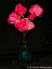 Roses (R. Sawdon Photography) Tags: rose roses wetrose flowers vase stilllife red blue