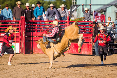 Rodeo in Holstein, ON (face_into_nature) Tags: horses horse ontario canada cowboy bull bulls rodeo cowgirl holstein