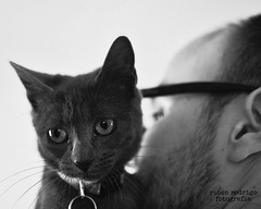 Happy furry Friday (Mister Blur) Tags: people blue russian cat blackandwhite catandpeople happy furry friday nikon d7100 35mm bokeh depthoffield